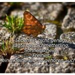 Schmetterling mit dem Zitat: Leben ist nicht genug, sagte der Schmetterling. Sonnenschein, Freiheit und eine kleine Blume gehören auch dazu. Hans Christian Andersen
