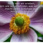 Blütenkelch mit dem Zitat: Nicht was wir erleben, sondern wie wir empfinden was wir erleben, macht unser Schicksal aus. Marie von Ebner-Eschenbach