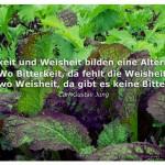 Salat mit dem Zitat: Bitterkeit und Weisheit bilden eine Alternative: Wo Bitterkeit, da fehlt die Weisheit, und wo Weisheit, da gibt es keine Bitterkeit. Carl-Gustav Jung