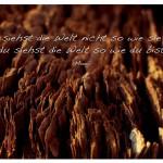 Baumstumpf mit dem Zitat: Du siehst die Welt nicht so wie sie ist, du siehst die Welt so wie du bist. Mooji