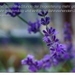 Lavendel mit dem Zitat: Glaube mir, dass eine Stunde der Begeisterung mehr gibt, als ein Jahr gleichmäßig und einförmig dahinziehenden Lebens.Christian Morgenstern