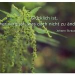 Brennnessel mit dem Zitat: Glücklich ist, wer vergisst, was doch nicht zu ändern ist. Johann Strauss