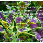 Pflanze mit dem Zitat: Liebst du das Leben? Dann vergeude keine Zeit, denn daraus besteht das Leben. Benjamin Franklin