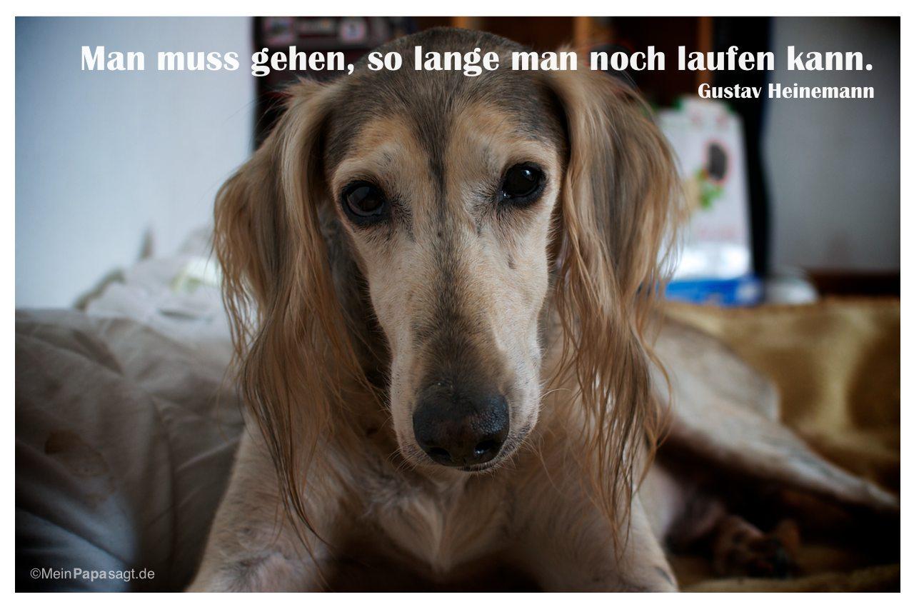 Alter Saluki mit dem Zitat: Man muss gehen, so lange man noch laufen kann. Gustav Heinemann