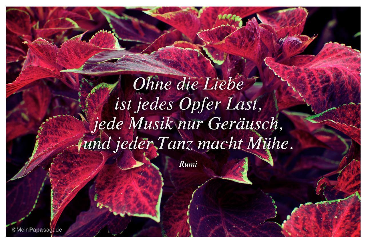 Pflanze mit dem zitat ohne die liebe ist jedes opfer last jede musik