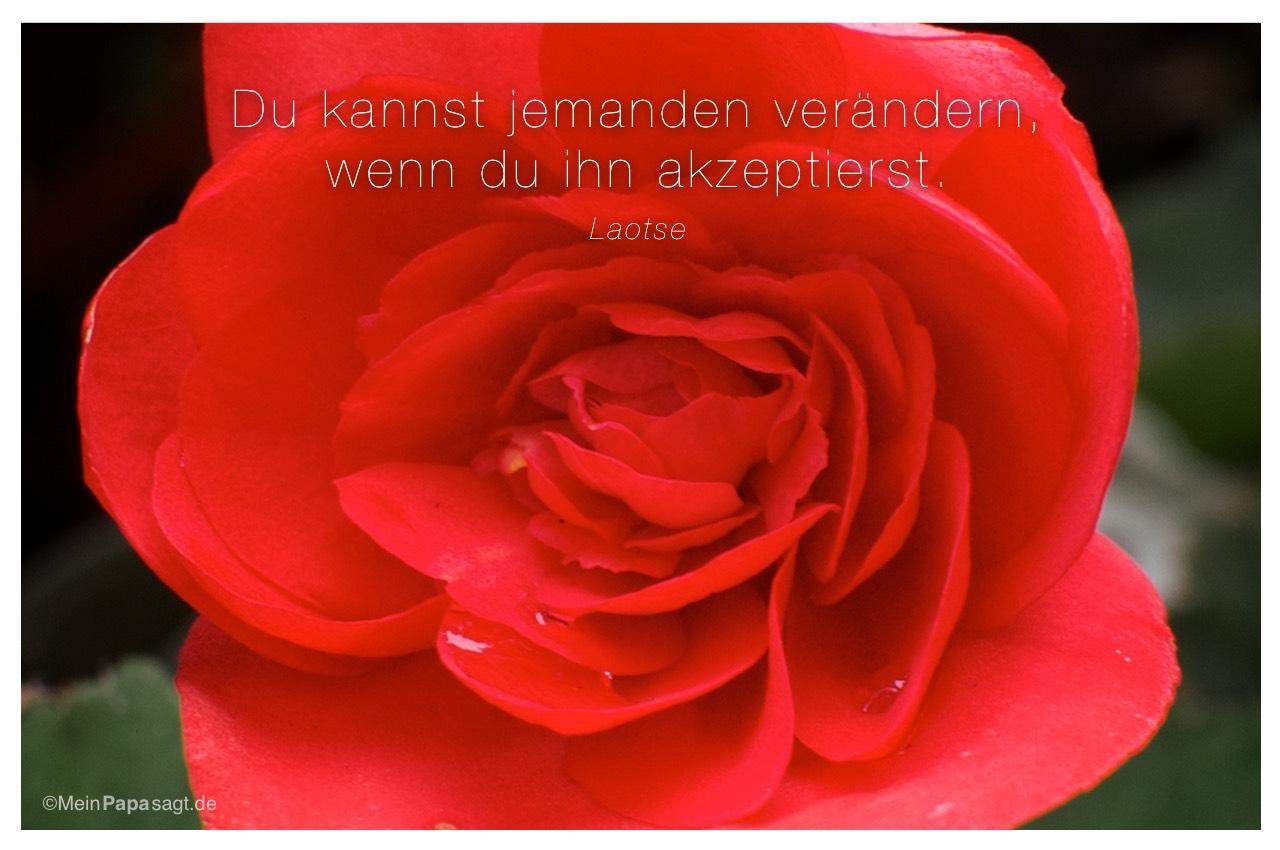 Blüte mit Mein Papa sagt Laotse Zitate Bilder: Du kannst jemanden verändern, wenn du ihn akzeptierst - Laotse