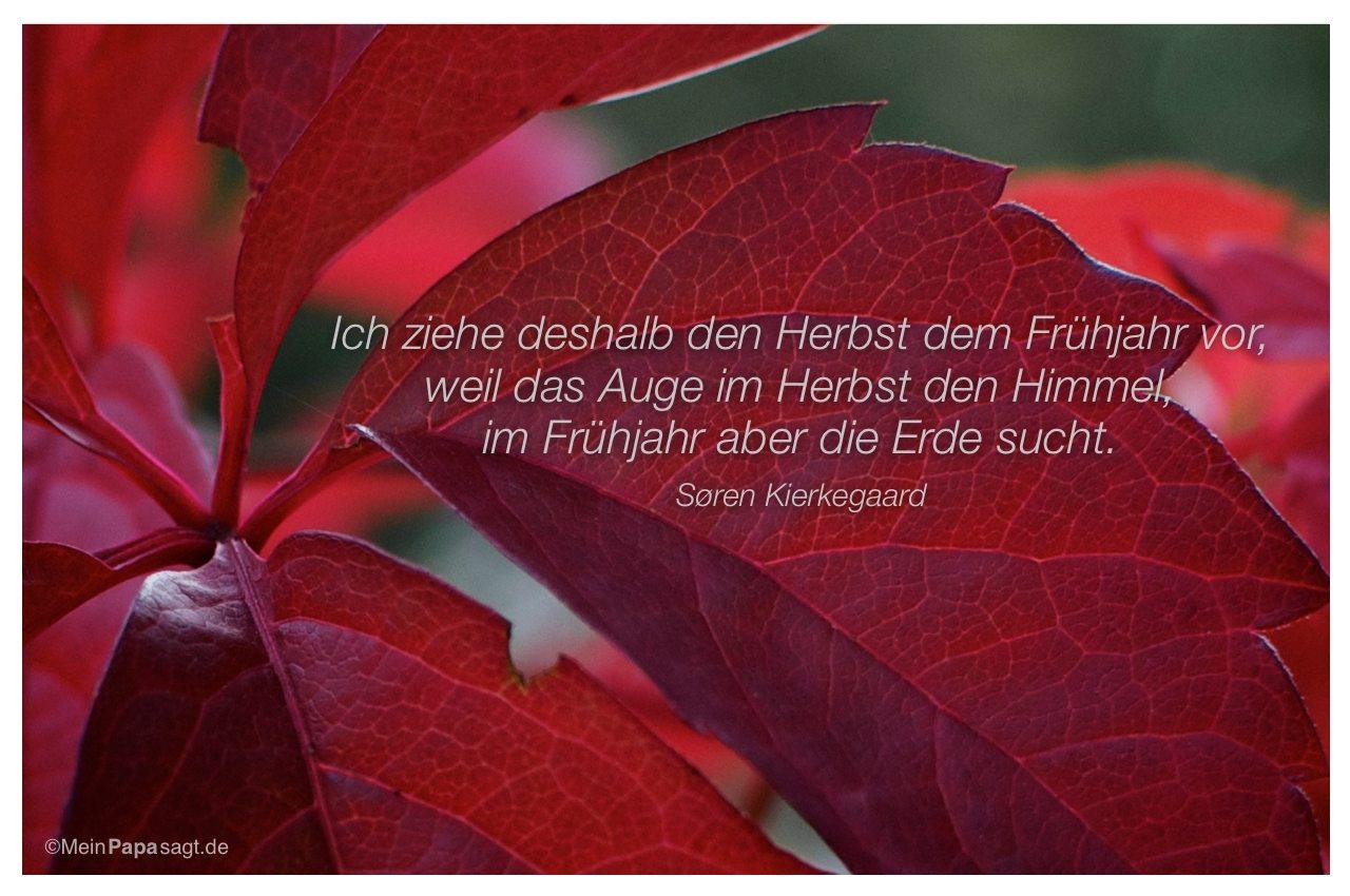 Herbstlaub mit dem Zitat: Ich ziehe deshalb den Herbst dem Frühjahr vor, weil das Auge im Herbst den Himmel, im Frühjahr aber die Erde sucht. Søren Kierkegaard