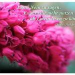 Blütenkelche mit dem Zitat: Lerne Nein zu sagen. Es wird dir mehr nutzen als Latein lesen zu können. Charles Haddon Spurgeon