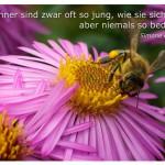 Blüte mit Biene und dem Zitat: Männer sind zwar oft so jung, wie sie sich fühlen, aber niemals so bedeutend. Simone de Beauvoir