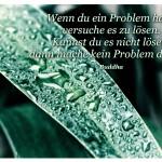 Tropfen auf Palmenblatt mit dem Zitat: Wenn du ein Problem hast, versuche es zu lösen. Kannst du es nicht lösen, dann mache kein Problem daraus. Buddha