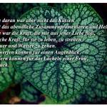 Herzförmiges Pflanzenblatt mit dem Zitat: Das Beste daran war aber nicht das Küssen und nicht das abendliche Zusammenpromenieren und Heimlichtun. Das Beste war die Kraft, die mir aus jener Liebe floß, die fröhliche Kraft, für sie zu leben, zu streiten, durch Feuer und Wasser zu gehen. Sich wegwerfen können für einen Augenblick, Jahre opfern können für das Lächeln einer Frau, das ist Glück. Hermann Hesse