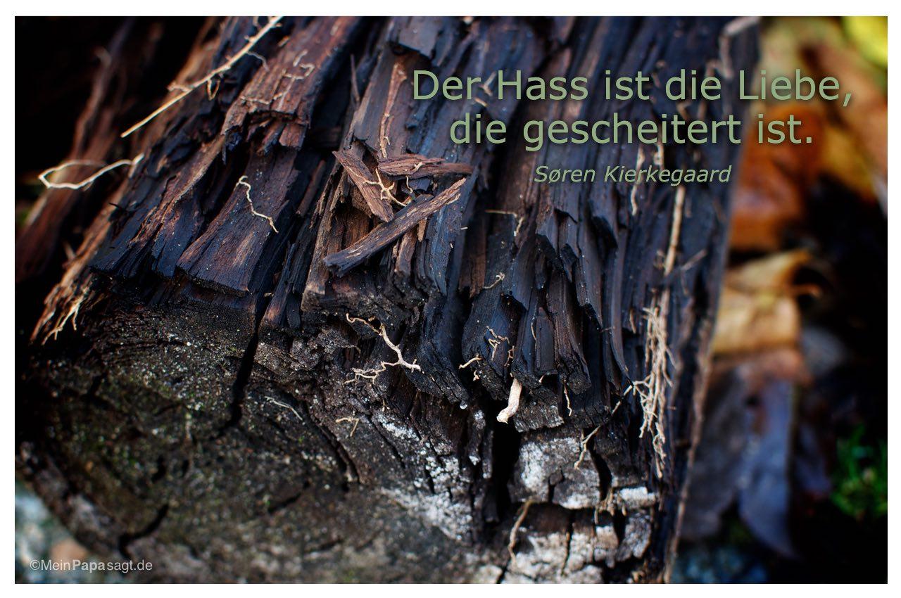 verrotteter Baumstamm mit dem Zitat: Der Hass ist die Liebe, die gescheitert ist. Søren Kierkegaard