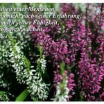 Heidekraut mit dem Zitat: Die Weisheit eines Menschen misst man nicht nach seiner Erfahrung, sondern nach seiner Fähigkeit, Erfahrungen zu machen. George Bernard Shaw
