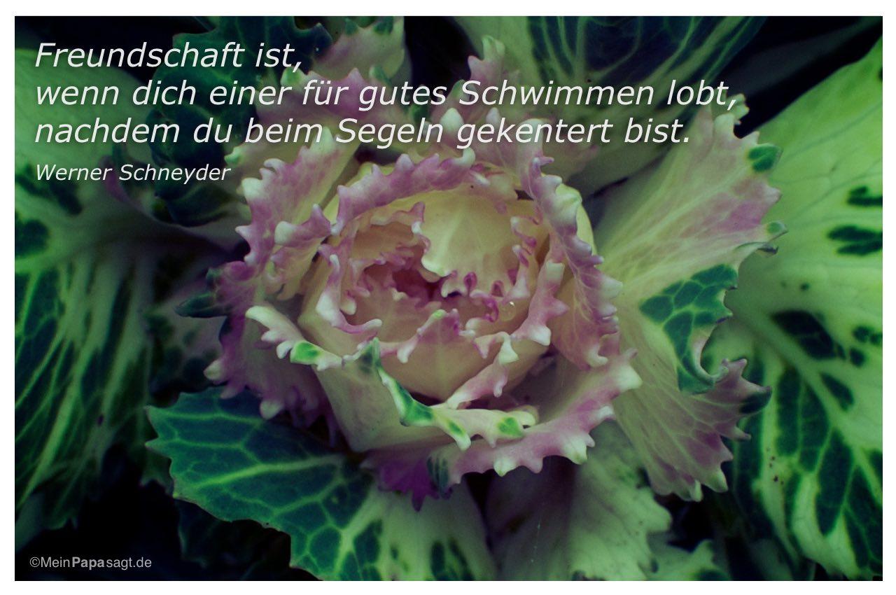Pflanze mit dem Zitat: Freundschaft ist, wenn dich einer für gutes Schwimmen lobt, nachdem du beim Segeln gekentert bist. Werner Schneyder