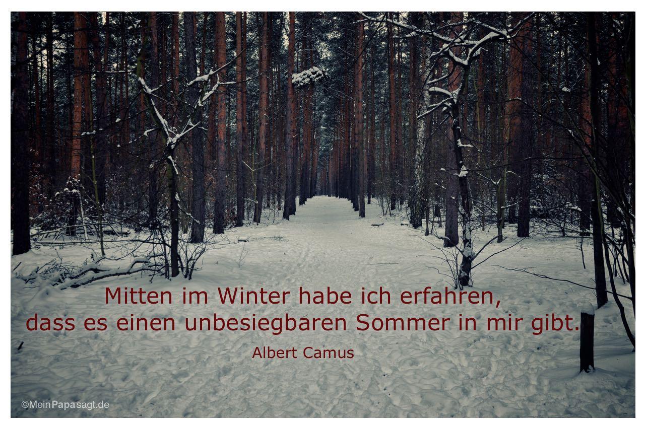 Winter im Berliner Grunewald mit dem Albert Camus Zitat: Mitten im Winter habe ich erfahren, dass es einen unbesiegbaren Sommer in mir gibt. Albert Camus