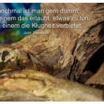 Alter Baumstamm mit dem John Steinbeck Zitat: Manchmal ist man gern dumm, wenn einem das erlaubt, etwas zu tun, was einem die Klugheit verbietet. John Steinbeck