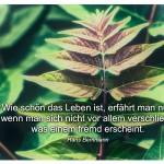 Blätter mit dem Hans Bemmann Zitat: Wie schön das Leben ist, erfährt man nur, wenn man sich nicht vor allem verschließt, was einem fremd erscheint. Hans Bemmann
