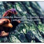 Pilze am Baumstamm mit dem Phil Bosmans Zitat: Glückliche Menschen brauchen nicht viel, um glücklich zu sein. Phil Bosmans