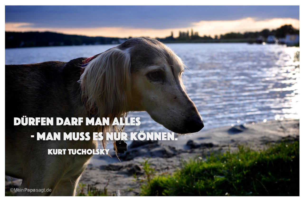 Saluki mit dem Kurt Tucholsky Zitat: Dürfen darf man alles - man muss es nur können. Kurt Tucholsky