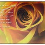 Rose mit dem Hans Bemmann Zitat: Leicht wie ein Vogel schwerelos halte mich fest sonst fliege ich geradewegs in den Himmel. Hans Bemmann