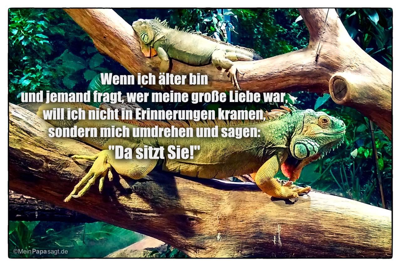 """Leguane mit dem Spruch: Wenn ich älter bin und jemand fragt, wer meine große Liebe war, will ich nicht in Erinnerungen kramen, sondern mich umdrehen und sagen: """"Da sitzt Sie!"""""""