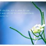 Blüte mit dem Liedtext: Wenn ich dachte, ich tu alles für sie war alles was ich tat für mich irgendwie. Die Fantastischen Vier