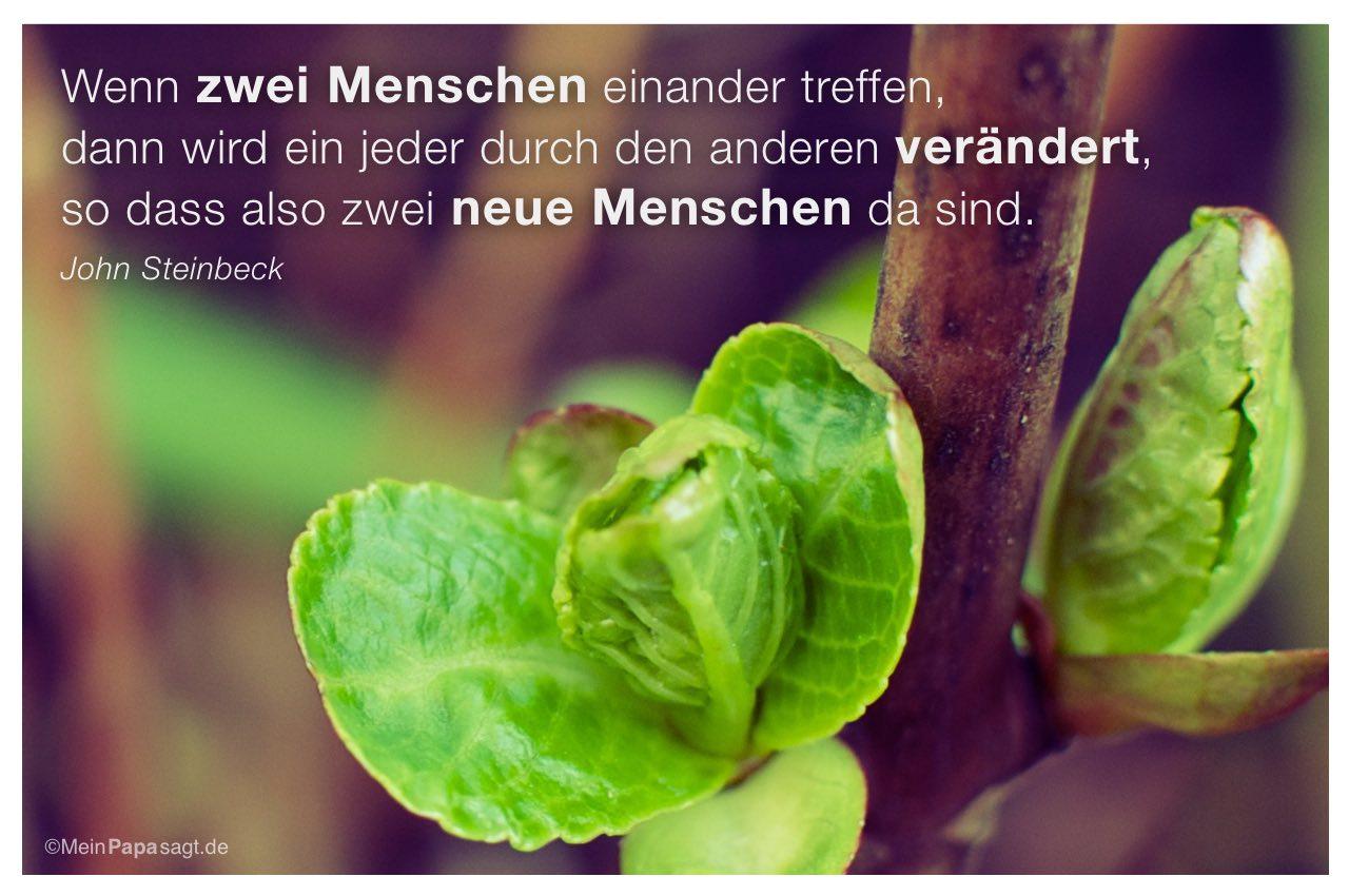 Knospen mit dem John Steinbeck Zitat: Wenn zwei Menschen einander treffen, dann wird ein jeder durch den anderen verändert, so dass also zwei neue Menschen da sind. John Steinbeck