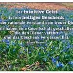 Waldblumen mit dem Albert Einstein Zitat: Der intuitive Geist ist ein heiliges Geschenk und der rationale Verstand sein treuer Diener. Wir haben eine Gesellschaft geschaffen, die den Diener verehrt und das Geschenk vergessen hat. Albert Einstein