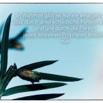 Kleiner Tannenzapfen mit dem Rumi Zitat: In Wahrheit gibt es nur ein einziges Licht, das durch unterschiedliche Fenster scheint und uns durch die Person jedes einzelnen Propheten erreicht. Rumi