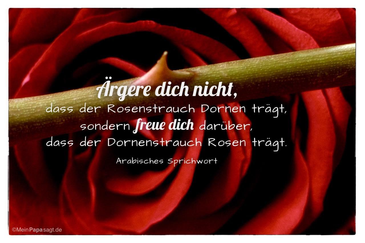 Rose mit Dornen und dem arabischen Sprichwort: Ärgere dich nicht, dass der Rosenstrauch Dornen trägt, sondern freue dich darüber, dass der Dornenstrauch Rosen trägt. Arabisches Sprichwort