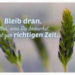 Blüten mit dem Spruch: Bleib dran. Alles, was Du brauchst, kommt zur richtigen Zeit.