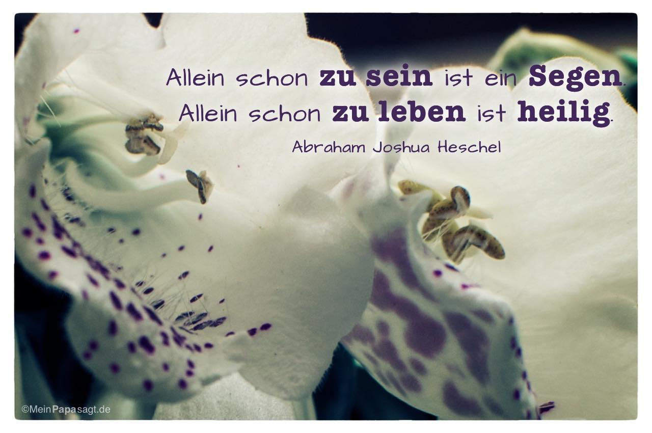 Blütenkelch mit dem Abraham Joshua Heschel Zitat: Allein schon zu sein ist ein Segen. Allein schon zu leben ist heilig. Abraham Joshua Heschel