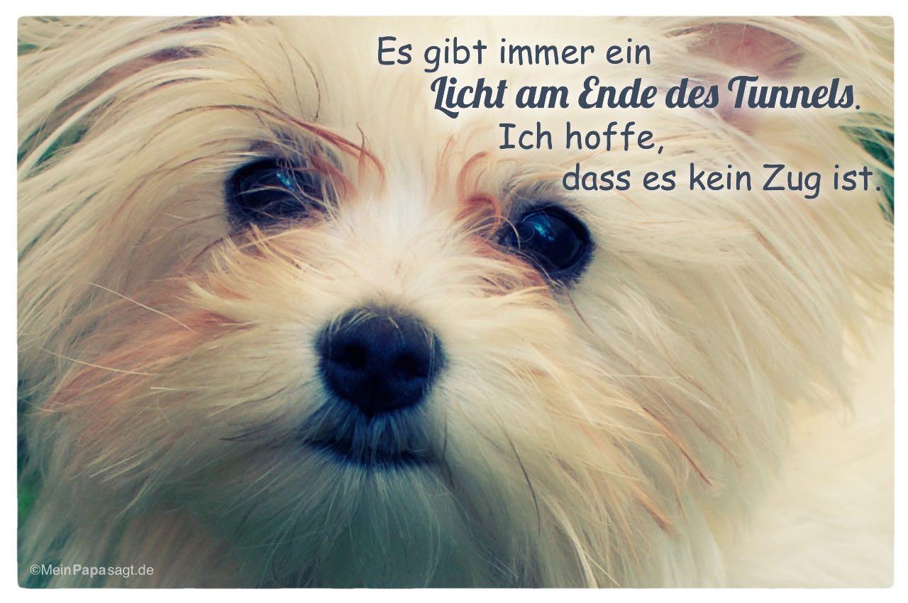 Kleiner Hund mit dem Spruch: Es gibt immer ein Licht am Ende des Tunnels. Ich hoffe, dass es kein Zug ist.