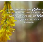 Blüten mit dem Albert Einstein Zitat: Es gibt zwei Arten, sein Leben zu leben: entweder so, als wäre nichts ein Wunder, oder so, als wäre alles ein Wunder. Ich glaube an Letzteres. Albert Einstein