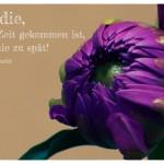 Blüte mit dem Bertolt Brecht Zitat: Für die, deren Zeit gekommen ist, ist es nie zu spät! Bertolt Brecht