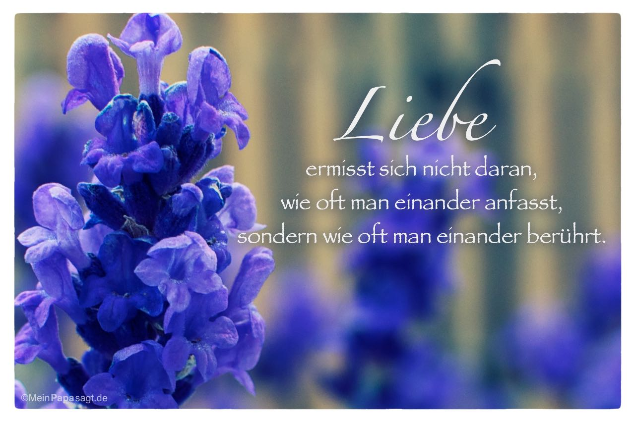 Lavendel mit dem Spruch: Liebe ermisst sich nicht daran, wie oft man einander anfasst, sondern wie oft man einander berührt.