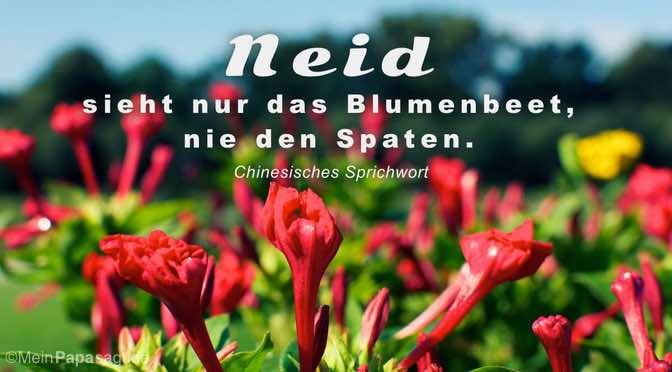 Neid sieht nur das Blumenbeet…