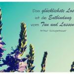 Blüten mit dem Arthur Schopenhauer Zitat: Das glücklichste Los ist die Entbindung vom Tun und Lassen. Arthur Schopenhauer