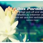 Blüten vorm Himmel mit dem Hermann Hesse Zitat: Das Paradies pflegt sich oft erst dann als Paradies zu erkennen zu geben, wenn wir aus ihm vertrieben sind. Hermann Hesse