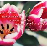 Tulpe mit dem Marie von Ebner-Eschenbach Zitat: Wenn zwei Menschen zugleich anfangen, einander zu lieben, das ist ein großes Glück. Marie von Ebner-Eschenbach