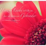 Gerbera mit dem Aurelius Augustinus Zitat: Wessen Herz mit Liebe erfüllt ist, der ist stets ein Gebender. Aurelius Augustinus
