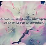 Blütenkelche mit dem Christian Morgenstern Zitat: Ich habe heute ein paar Blumen nicht gepflückt, um dir ihr Leben zu schenken. Christian Morgenstern