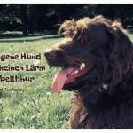 Labradoodle mit dem Kurt Tucholsky Zitat: Der eigene Hund macht keinen Lärm - er bellt nur. Kurt Tucholsky