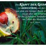 Kastanien-Samen mit dem Leo N. Tolstoi Zitat: Die Kraft der Gedanken ist unsichtbar wie der Same, aus dem ein riesiger Baum erwächst; sie ist aber der Ursprung für die sichtbaren Veränderungen im Leben des Menschen. Leo N. Tolstoi