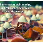 Pilze mit dem Pina Bausch Zitat: Mich interessiert nicht so sehr, wie sich Menschen bewegen, als was sie bewegt. Pina Bausch