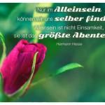 Rosenknospe mit dem Hermann Hesse Zitat: Nur im Alleinsein können wir uns selber finden. Alleinsein ist nicht Einsamkeit, sie ist das größte Abenteuer! Hermann Hesse