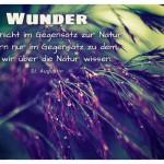 Gräser mit Morgentau und dem St. Augustin Zitat: Wunder stehen nicht im Gegensatz zur Natur, sondern nur im Gegensatz zu dem, was wir über die Natur wissen. St. Augustin