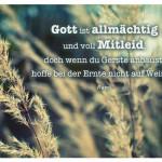 Gräser mit dem Rumi Zitat: Gott ist allmächtig und voll Mitleid, doch wenn du Gerste anbaust, hoffe bei der Ernte nicht auf Weizen. Rumi