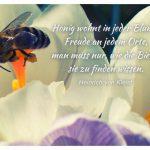 Biene im Blütenkelch mit dem Heinrich von Kleist Zitat: Honig wohnt in jeder Blume, Freude an jedem Orte, man muss nur, wie die Biene, sie zu finden wissen. Heinrich von Kleist