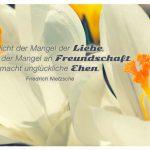 Krokusse mit dem Friedrich Nietzsche Zitat: Nicht der Mangel der Liebe, sondern der Mangel an Freundschaft macht unglückliche Ehen. Friedrich Nietzsche